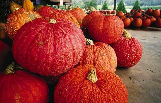 Pumpkin Patch 7 es
