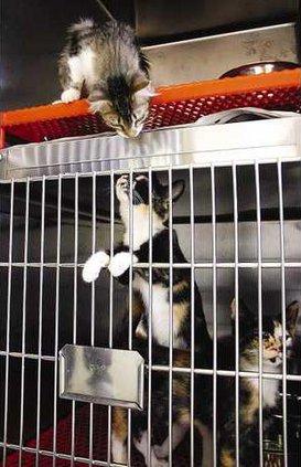 Animal Shelter 3 es
