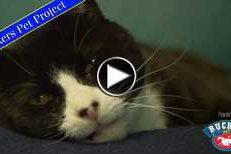 Rucker Pet Project: Prissy