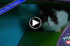 Rucker Pet Project: Oreo
