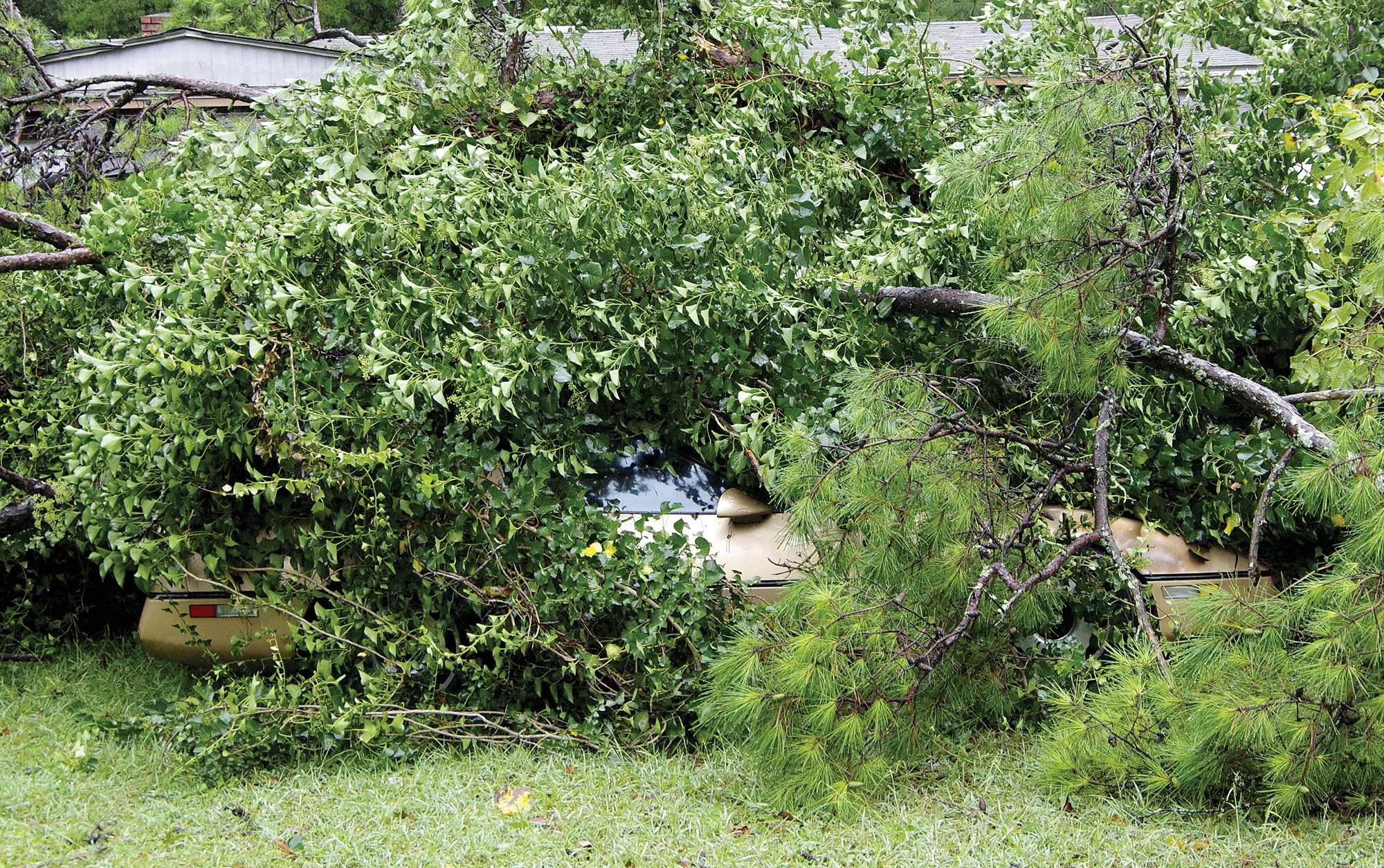 Corvette damaged by tree