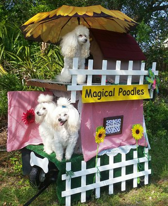 Micheles magical poodles