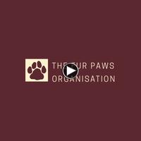 Four Paws Org