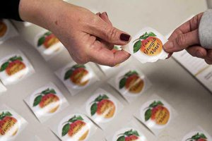 FCN Voting stickers 113018