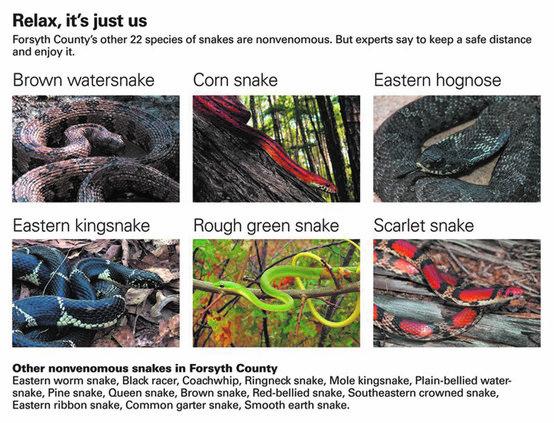 Nonvenomous snakes