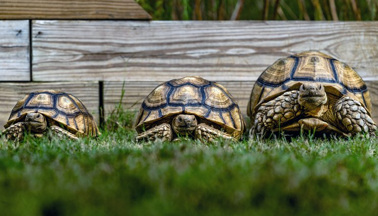 20191106_Tortoises_3_web