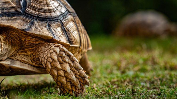 20191106_Tortoises_5_web